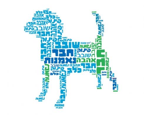 חנות החיות- כלב